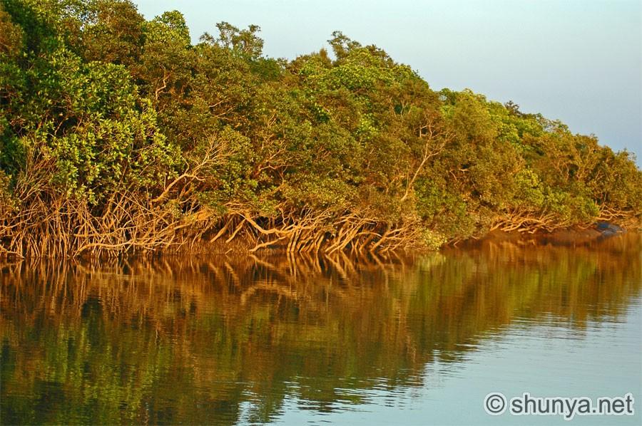 Essay on Sundarban National Park