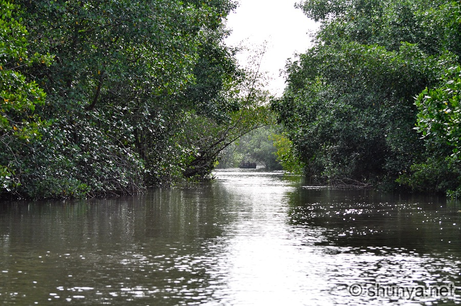 caroni swamp Book your tickets online for caroni swamp, st ann's: see 238 reviews, articles, and 136 photos of caroni swamp on tripadvisor.